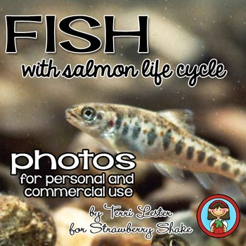 Photos Photographs FISH and SALMON LIFE CYCLE Personal and