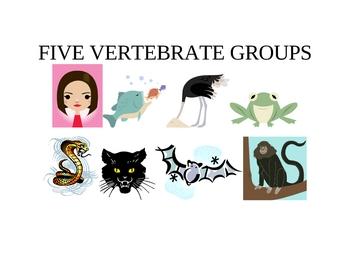 FIVE VERTEBRATE GROUPS