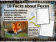 FOXES - visually engaging PPT w facts, video links, handou