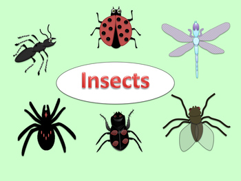 FREE Clip Art Insects (ant, ladybug, beetle, fly, dragonfl