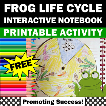 free frog life cycle spinner science activities for kids