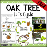 FREE Oak Tree Life Cycle Sequencing Cards