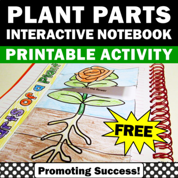 science parts of a plant foldable activities for kids