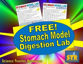 FREE Stomach Model Digestion Lab