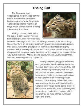 FREEBIE!!! - Fishing Cat passage with questions