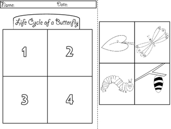 FREEBIE - Frog & Butterfly Life Cycle