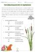 PDF 4 Parts of a Flowering Plant 5 Foldables Flip Books