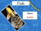 Fabulous Fish PPT Riddle Game and 4 Worksheets