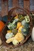 Fall Harvest and Halloween Photographs for Classroom and C