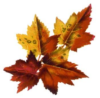 Fall Leaves Haiku and Drawing