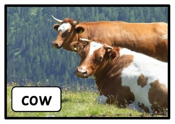 Farm Animals Photo Set