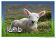 Farm Animals and Babies Photos/ Pictures for Display/ Post