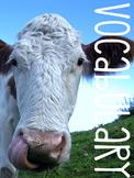 Farm Vocabulary Cards: Literacy Resources