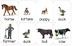 Farm animal Montessori matching cards