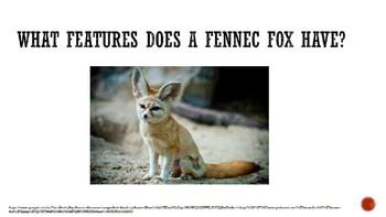 Fennec Fox Book