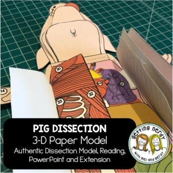 Fetal Pig Dissection - 3-D Paper Model