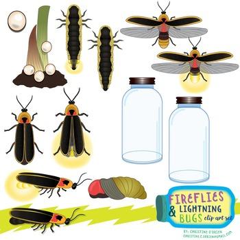 Fireflies and Lightning Bugs Life Cycle Clip Art Set