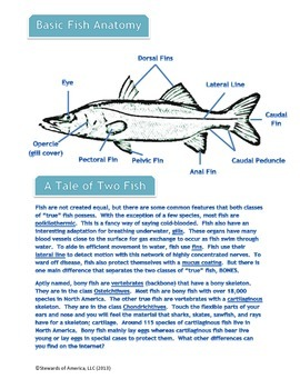 Fish Anatomy, Biology, and Locomotion with Wordsearch Activity
