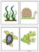 ESL Vocabulary/Conversation Building Cards-Fish and Pond L