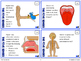 Five Senses and Sensory Processing Task Cards (Differentia