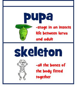 Florida Pearson Interactive Science Vocabulary Cards with