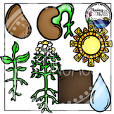 Flower Life Cycle Clipart Bundle