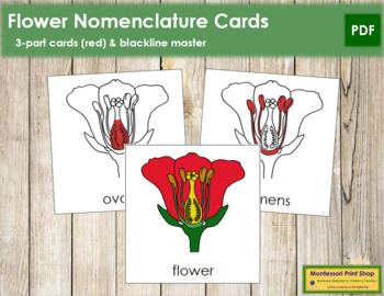 Flower Nomenclature Cards (Red)