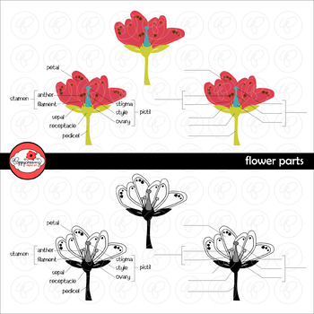 Flower Parts Science Diagram Clipart by Poppydreamz