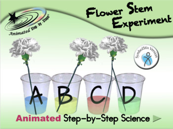 Flower Stem Experiment - Animated Step-by-Step Science - S