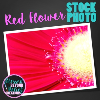 Flower Stock Photo ◆ Red Flower Stock Image ◆ Flower Photograph