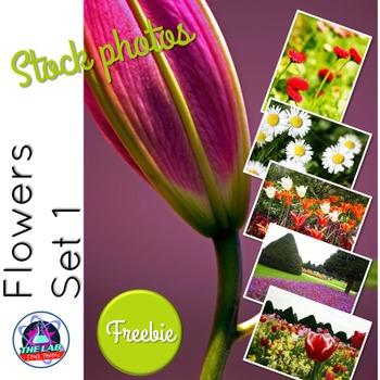 Flower Stock Photos Set 1 Freebie