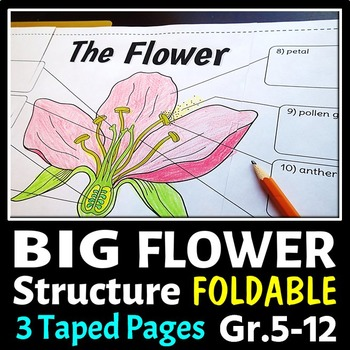 Flower Structure - Big Foldable for Interactive Notebooks