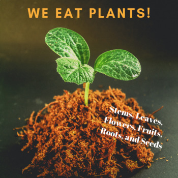 Parts of Plants - Learning about stems, roots, leaves, and