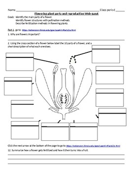 Flowering plant parts & reproduction web-quest Enrichment