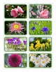 Flowers Flashcards