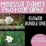Flowers Bundle {12 Photos}