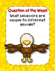 Fly, Eagle, Fly! Reading Street 3rd Grade Resource Pack Un