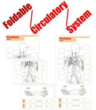 Foldable Circulatory System