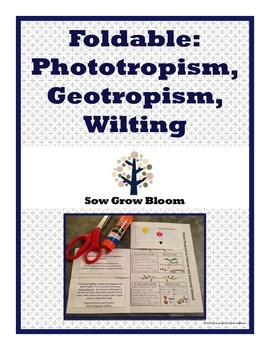 Foldable - Phototropism, Geotropism, and Wilting