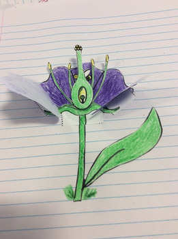 Foldable, interactive notebook parts of the flower, flower