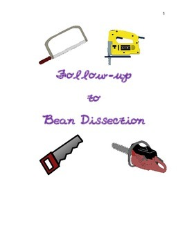 Follow Up to Bean Dissection