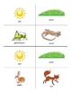 Food Chain Activity Cards