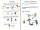 Food Chain, Food Web, Ecosystem, Producer, Consumer, Decom
