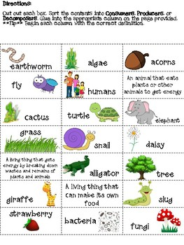 Food Chain Sort - Consumers, Producers, and Decomposers