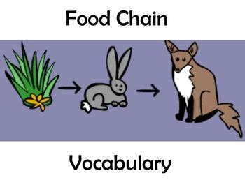 Food Chain Vocabulary