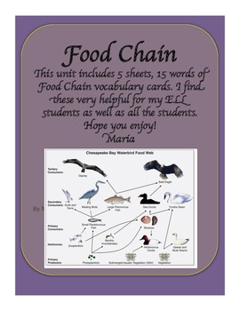 Food Chain Vocabulary Word Wall Cards