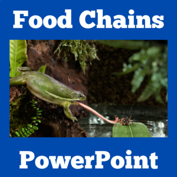 Food Chains Activity | Food Web Activity | Food Chains PowerPoint