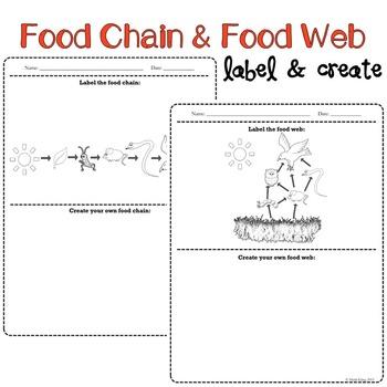 Food Chains & Food Webs