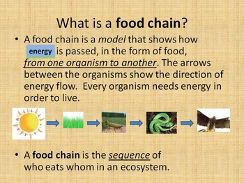 Food Chains Power Point