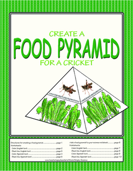 Food Pyramid Model for a Cricket